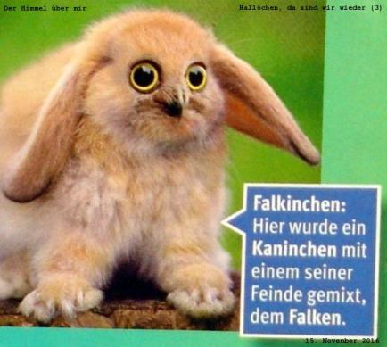 Falkinchen