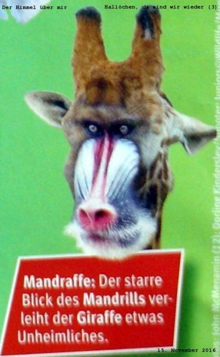 Mandraffe